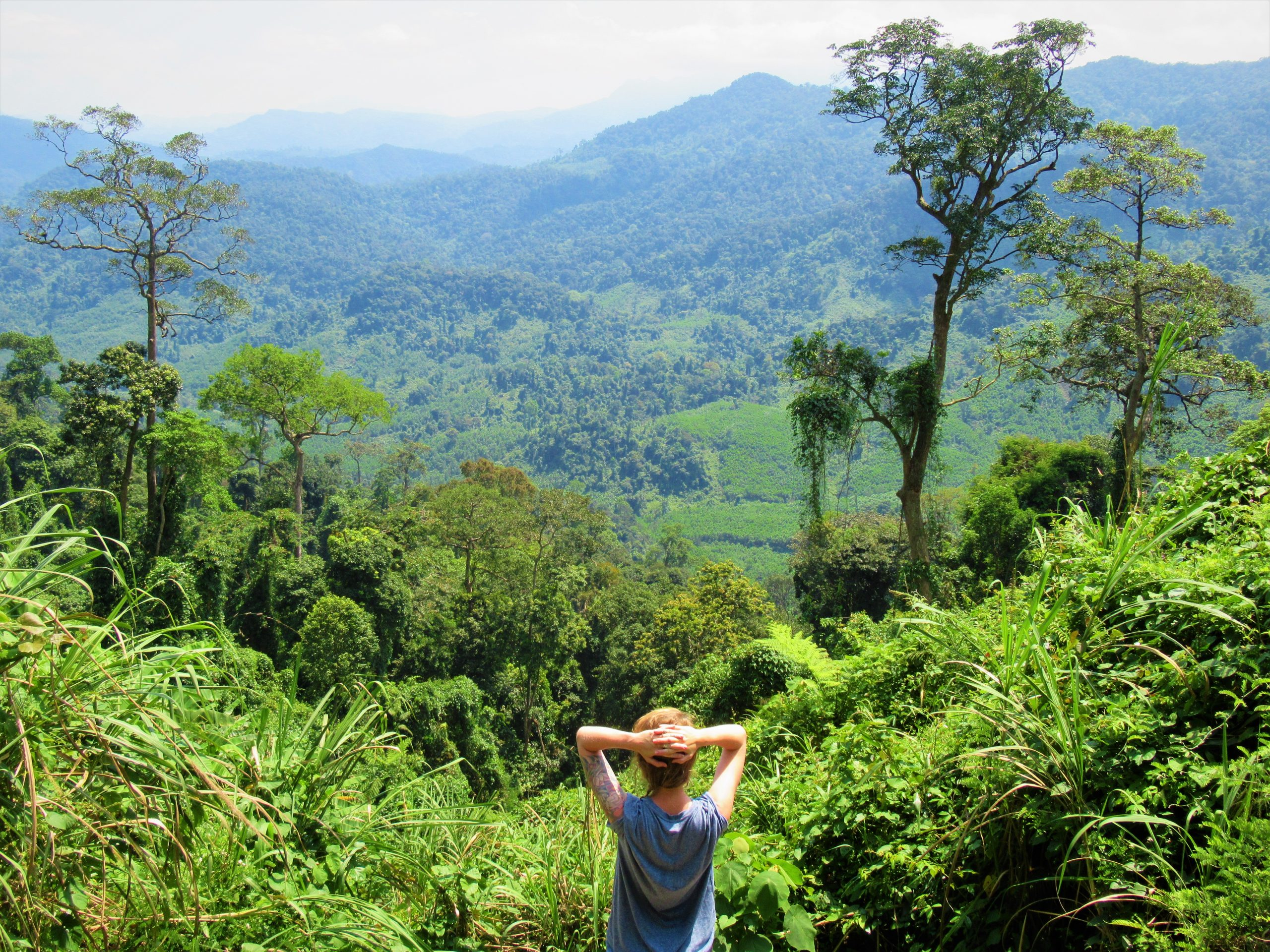 Gazing over the jungle canopy on the Western Ho Chi Minh Road, Central Vietnam