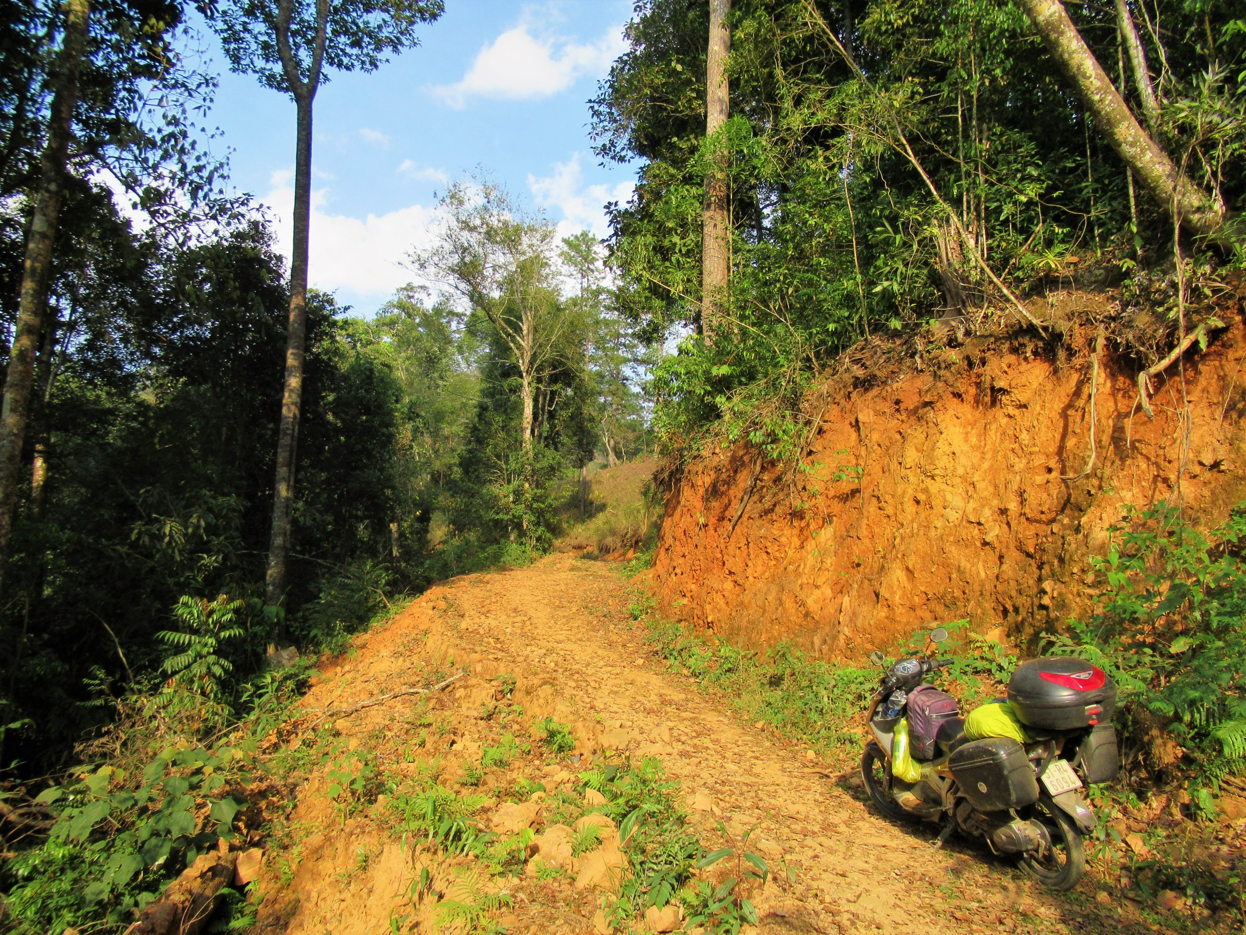 Dirt tracks into the pine forests near Dalat,  searching for a campsite, Central Highlands